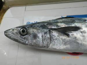 Sawara1